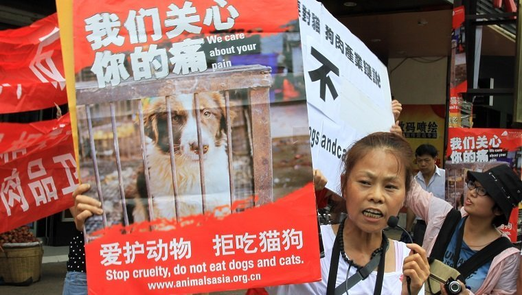 "YULIN, CHINA - JUNE 21: (CHINA OUT) A woman holds a poster to reject eating dogs on June 21, 2013 in Yulin, Guangxi province of China. June 21 is the annual ""Dog Meat Festival"" for people in Yulin. Local people in Yulin eats dogs meat to celebrite the ""Dog Meat Festival"", which caused the dissatisfaction among animal protecters. (Photo by VCG/VCG via Getty Images)"