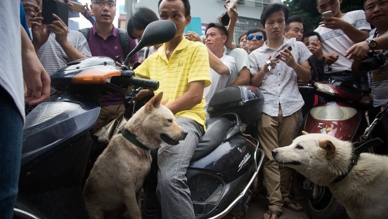 Vendors and bystanders wait for customers to buy dogs at a market in Yulin, in southern China's Guangin Yulin, in southern China's Guangxi province on June 22, 2015, during a dog meat festival. The city holds an annual festival devoted to the animal's meat on the summer solstice which has provoked an increasing backlash from animal protection activists. AFP PHOTO / JOHANNES EISELE (Photo credit should read JOHANNES EISELE/AFP/Getty Images)