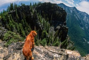 Protecting Your Dog From Hiking Hazards