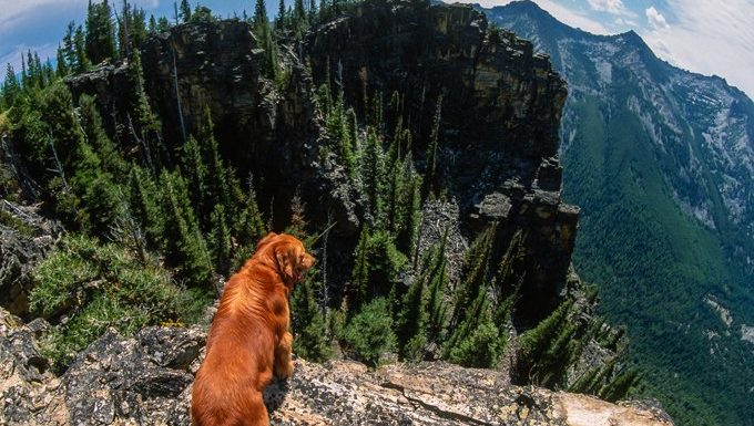 dog looking out over cliff and mountains