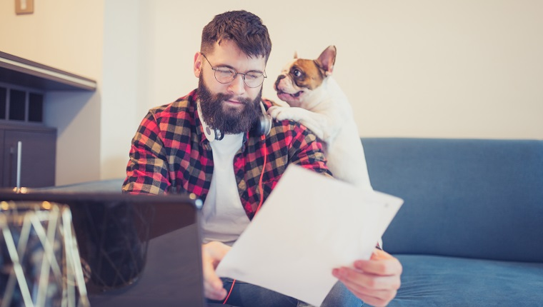 Handsome, hipster man sitting on the living room sofa with his dog, using laptop
