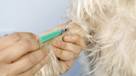 Titer Testing For Dogs: What Is It, And What Does It Mean For Yearly Vaccinations?
