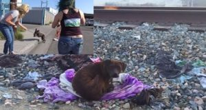 Homeless Pit Bull Protects Here Dead Friend For Two Weeks [VIDEO]