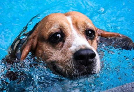 5 Ways To Keep Your Puppy Safe Around the Pool