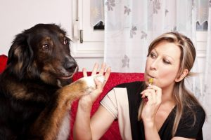 E-Cigarettes Are Toxic To Pets