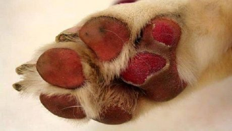 Hot Pavement: The Damage It Can Do To Your Dog's Paws And How To Avoid It