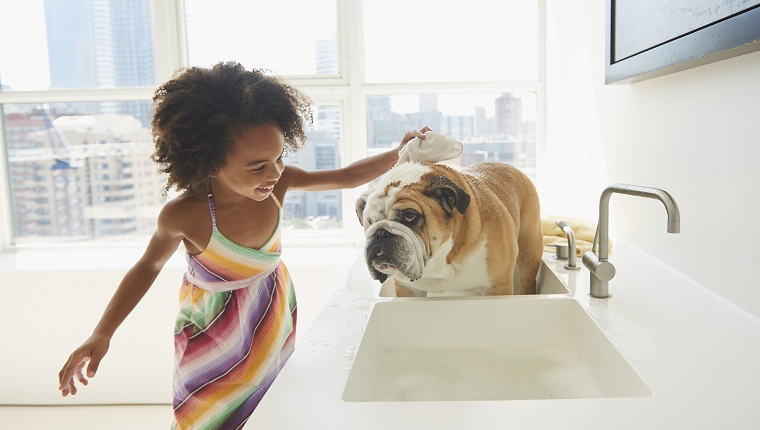 Black girl bathing pet dog in sink
