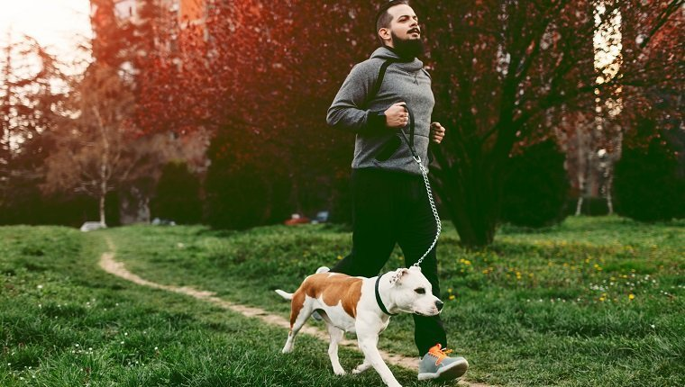 Man jogging with his pet, staffordshire bull terrier. He is jogging in his neighborhood.