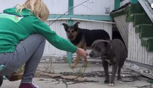 Pregnant Pit Bull Living Under Abandoned School Is Not Alone [VIDEO]