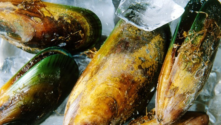 Green lipped mussels on ice