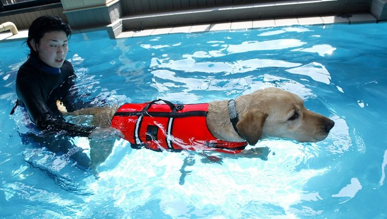 TOKYO - MAY 4: A dog receives swimming therapy at the Oedo Resort and Spa May 4, 2004 in Tokyo, Japan. Japan is on a long holiday (from May 1 to May 5) and some pet owners leave their animals at the spa. The spa offers swimming therapy and aromatherapy amongst other pooch pampering activities. (Photo by Koichi Kamoshida/Getty Images)