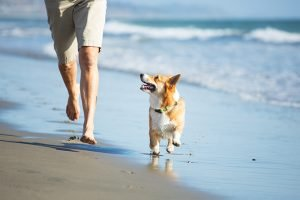 The 10 Best Dog Friendly Beaches in the U.S.