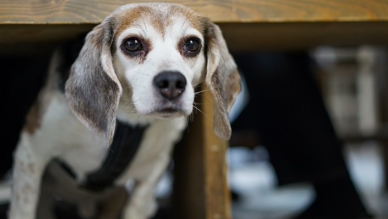 what is diazepam used for in dogs