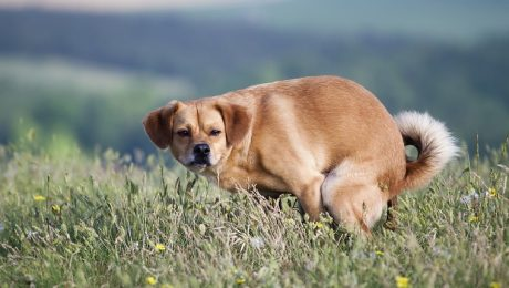 Irritable Bowel Syndrome (IBS) In Dogs: Symptoms, Causes, And Treatments