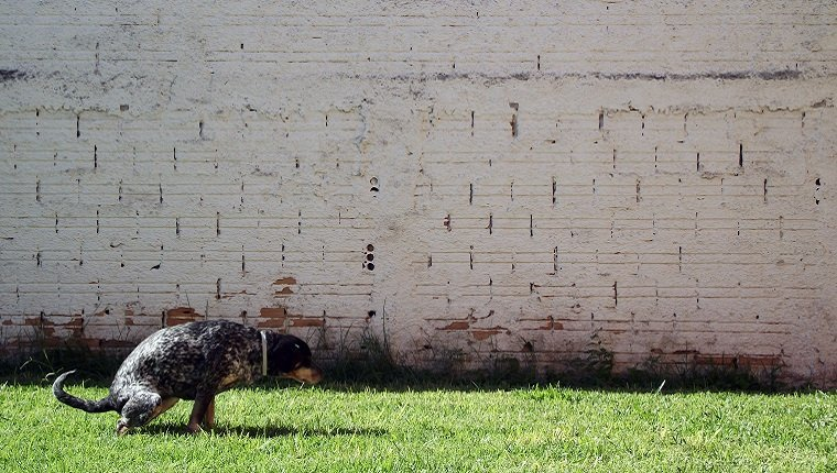 Squatted dog against wall