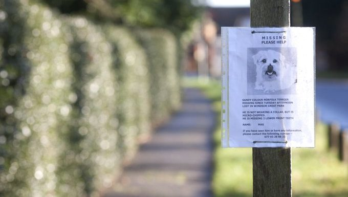 missing dog poster on street pole