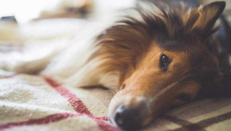 Metronidazole For Dogs: Uses, Dosage, And Side Effects - Dogtime
