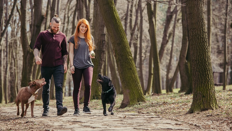 two people walking their dogs trough forest in the first days of Spring