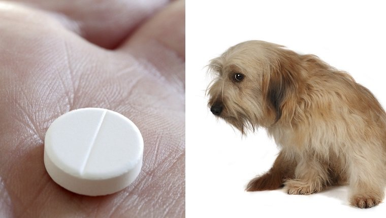Buspirone For Dogs: Uses, Dosage, And Side Effects - Dogtime