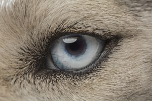 Dog Vision: Can Dogs See Color Or In The Dark?