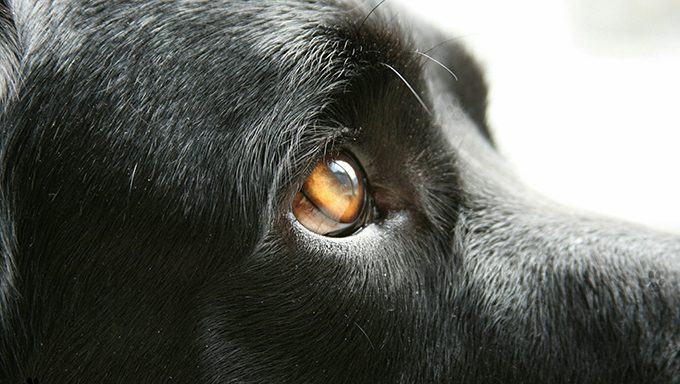 close up of dogs eye