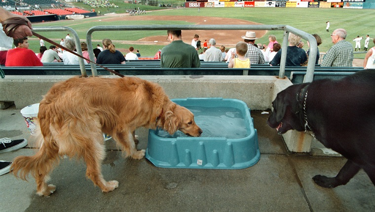 Slug: ME/DOGBALL Date: 7/2/2003 Photographer: Michael Williamson/TWP Neg# 144163 Harry Grove Stadium, Frederick, Md. Thirsty dogs were supplied with watering stations at Harry Grove Stadium during the game game between the Frederick Keys and the Myrtle Beach Pelicans tues. night. This event was called Bark in the Park and folks attending the game could bring their dog. ORG XMIT: 144163 ORG XMIT: M0307030402560450 (Photo by Michael Williamson/The Washington Post/Getty Images)