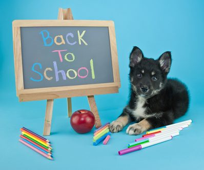 5 Ways To Help Your Dog Adjust To Back To School
