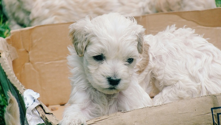 Close-Up Of Puppies In Cardboard Box