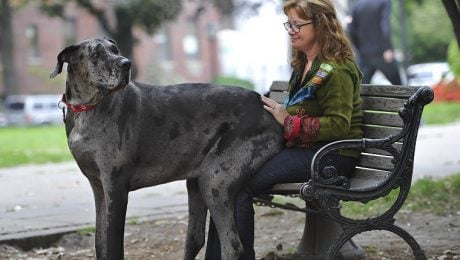 7 Great Danes Who Think They're Lap Dogs [VIDEOS]