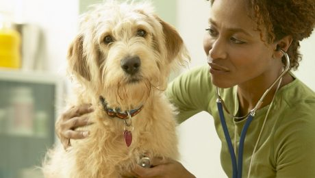 Hydralazine For Dogs: Uses, Dosage, & Side Effects