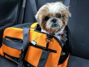 DogTime Product Review: Sleepypod Air And Clickit Sport Travel Safety