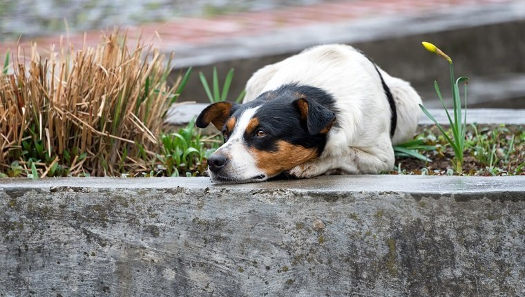 Lonely and sad homeless dog lying on the street