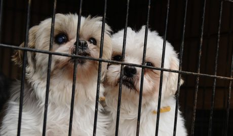 California: The First State To Ban The Sale Of Dogs, Cats & Rabbits From Mills