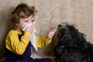 Can You Die Of A Dog Allergy?