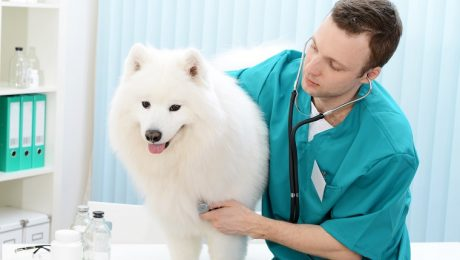 Pericarditis In Dogs: Symptoms, Causes, & Treatments