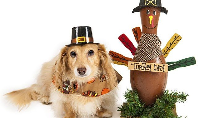 dog dressed as pilgrim next to turkey decoration