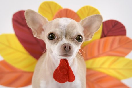Tips For Bringing Your Dog To A Thanksgiving Celebration