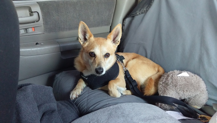 Driving With Dogs: Road Trip Tips - Dogtime