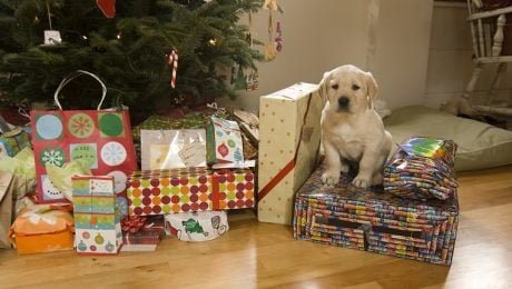 Holiday Puppies: A Nightmare After Christmas?