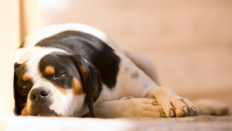 kaopectate dosage for dogs
