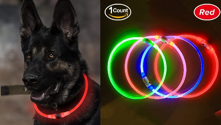 glow collar for dogs