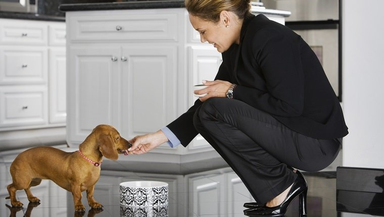 Hispanic businesswoman feeding dog