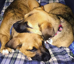 Cuddle Your Pup: National Cuddle Up Day [PICTURES]
