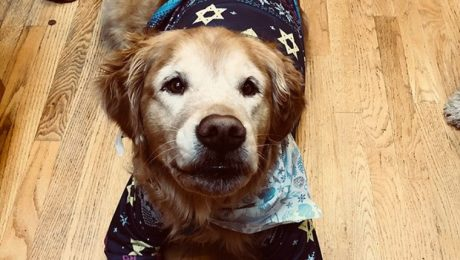 Chag Sameach! 20 Adorable Hanukkah Dogs [PICTURES]
