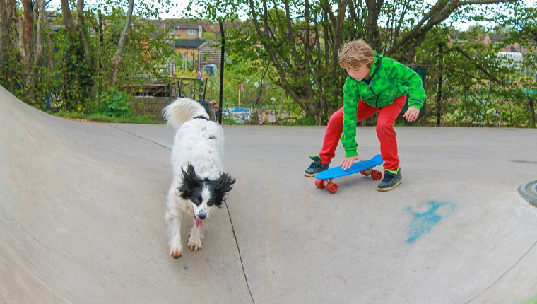 Child playing with his dog in a skate park