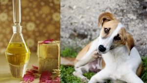 Neem Oil For Dogs: What Is It And What Does It Do?