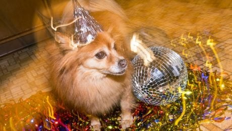 21 Dogs Ready To Celebrate And Ring In The New Year [PICTURES]