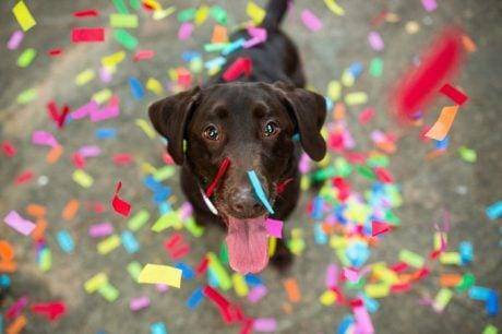 New Year's Resolutions That Will Make You A Better Dog Parent