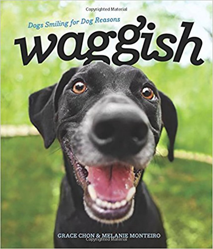 waggish book
