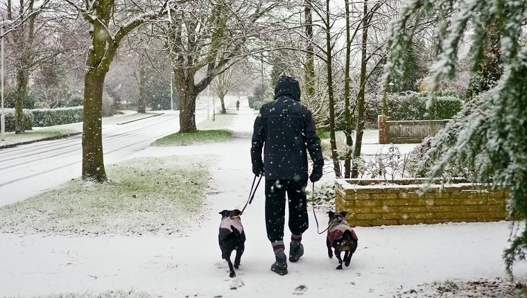 A man walking his dogs in the snow,